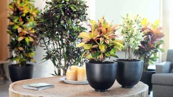 Комнатные растения для кухни: как выбрать, где расставить, какие подойдут